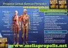 Manfaat Melia Propolis Untuk Kesehatan