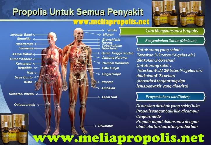 manfaat melia propolis untuk penyakit