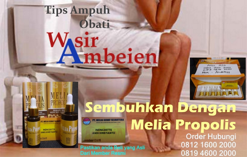 obat alami ambeien wasir propolis